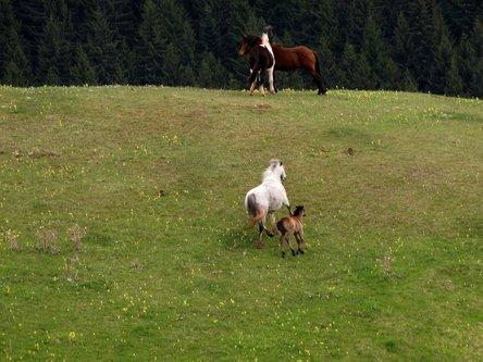 Marisimo Mustang 1