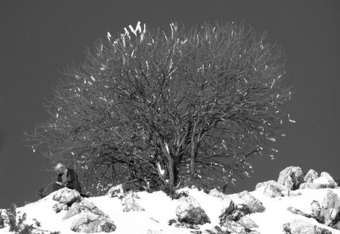 Marisimo Pod drvcetom