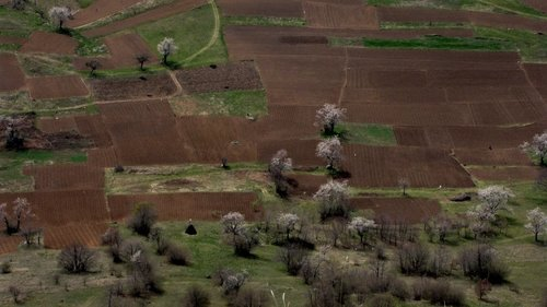 Marisimo Maljčiki su bili u polju