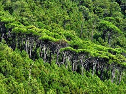 Marisimo Lijepa šuma je to
