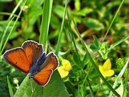 Marisimo Zelengorski  oranje