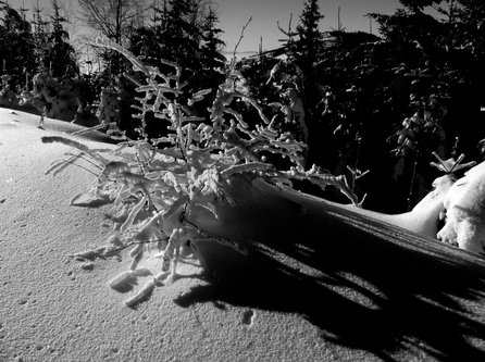 Marisimo Zima je bila sa puno snijega