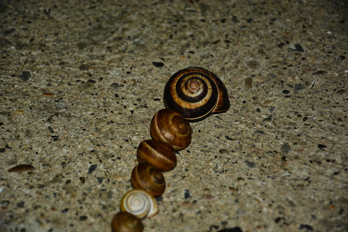 Marjan_Despotovic Snails
