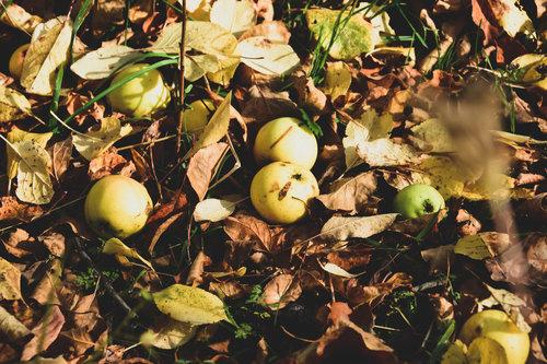 Marjan_Despotovic Jesen 2