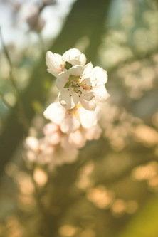 Maverick Prolećna tišina