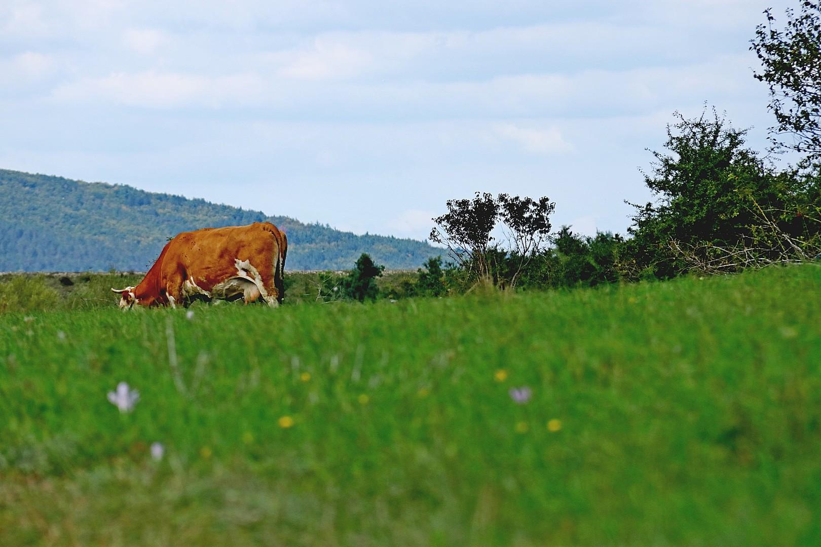 Velebitski pašnjaci