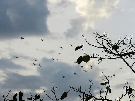 Merina Odlaze ptice