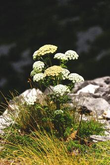 Merina Priroda nas daruje
