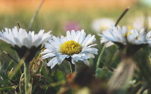Merina Proljeće