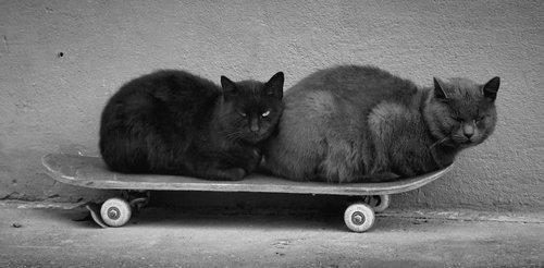 Mihael Siva i crna