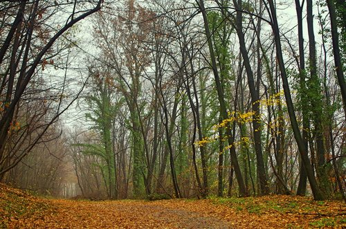Mihael Autumn colours