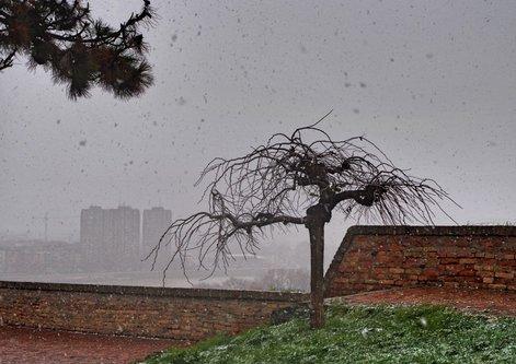 Mihael Prvi sneg