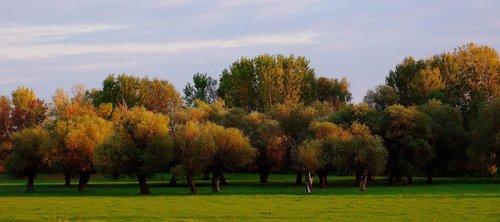 Mihael trees