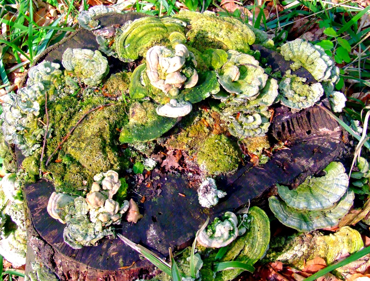 Svet gljiva
