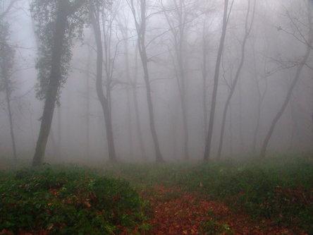 Mihael Čudna šuma