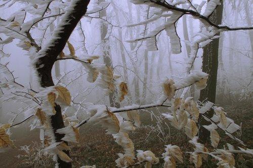 Mihael Jesen i zima