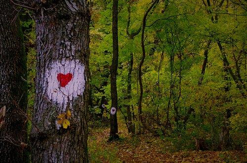 Mihael Od srca do srca