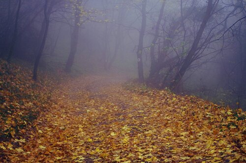Mihael Colors in the fog