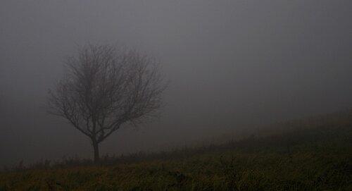 Mihael Fog