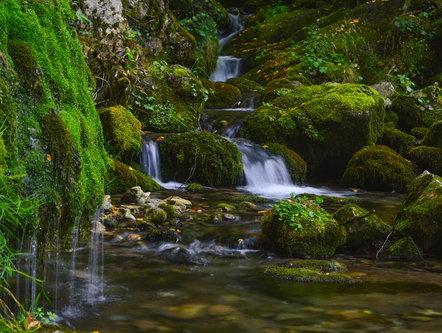 MilosKaraklic Planinski potok na obroncima Tare.