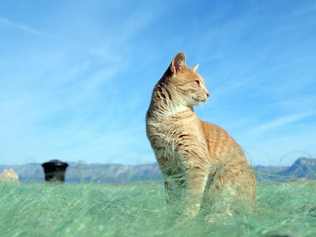 Mačak u mreži