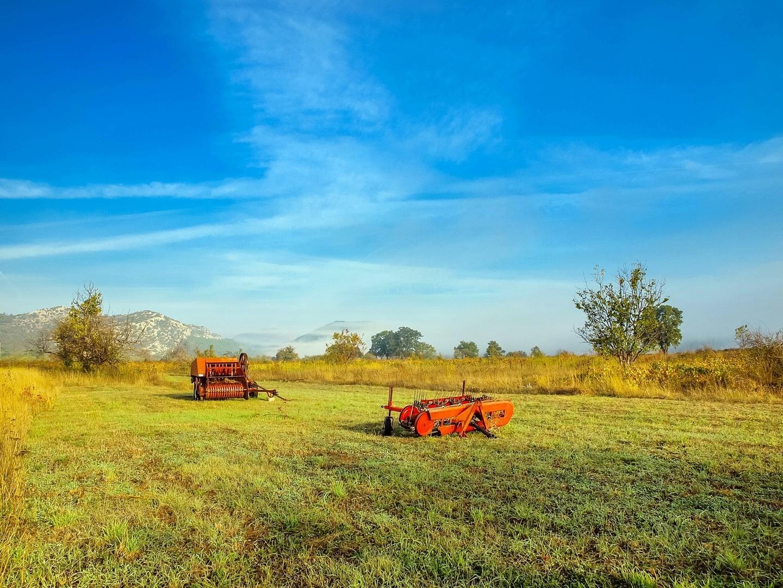 u polju