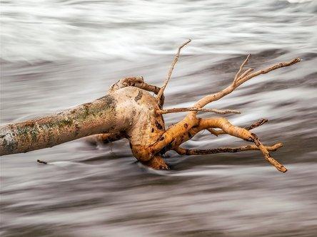 MirBal korijeni