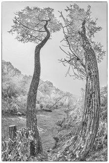 Mirsad Kroz vrbe prizor