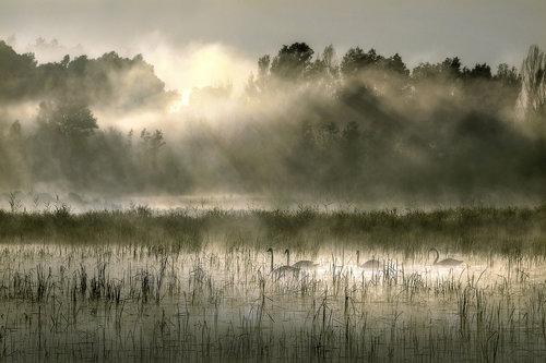 Mirsad Četvorka u zoru na jezeru