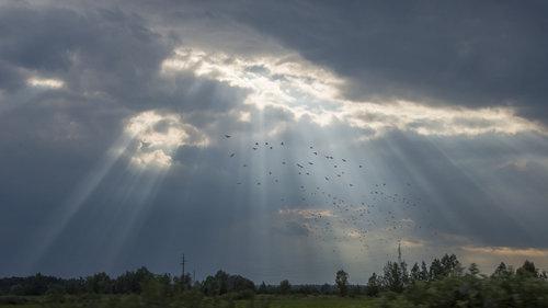 Mirsad Nebeska lepeza sa pticama