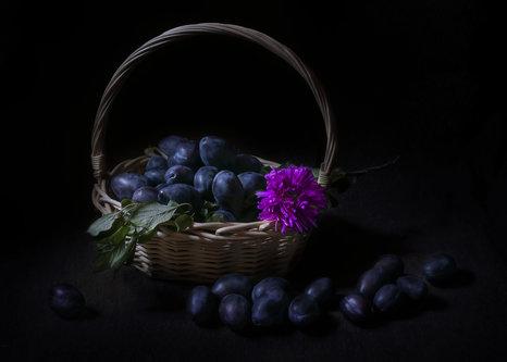 Mirsad Modra faza jeseni