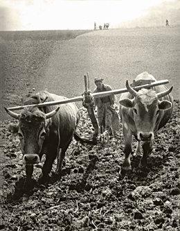 Mirsad Zivot sela 1981. godina