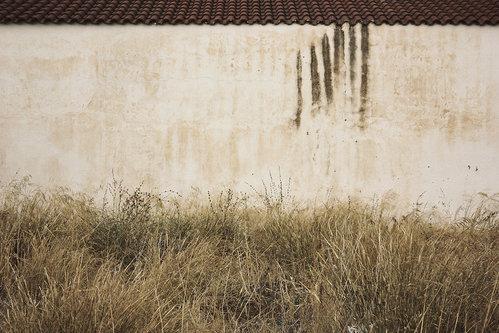 Momir Krov, zid i trava