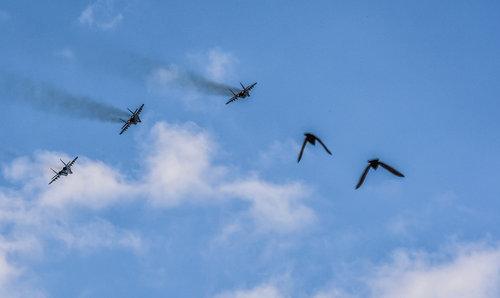 Nadda Svaka ptica svome jatu leti