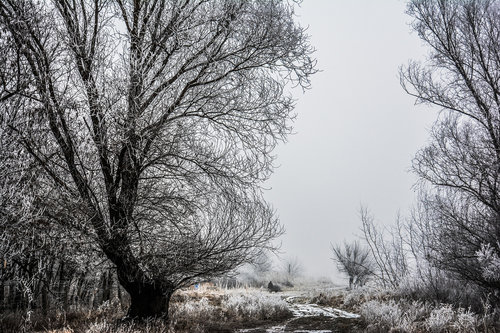 Nadda Zimsko jutro