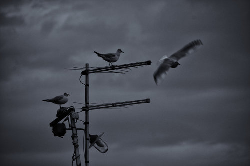 NenadBorojevicFoto Flyover ( Preletanje )