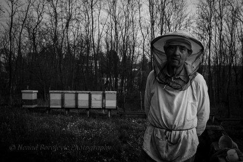 NenadBorojevicFoto Bee..... ( Pčela )