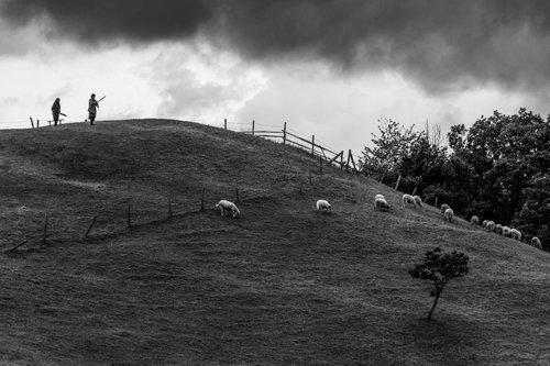 NenadBorojevicFoto Flock of Sheep II ( Stado 2 )