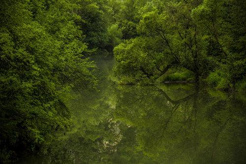 NenadBorojevicFoto Green world ( Zeleni svet )