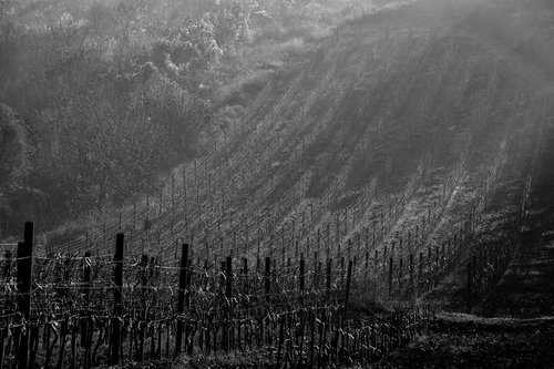 NenadBorojevicFoto King's Vineyard ( Kraljev Vinograd )
