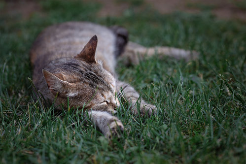 Nenad_Ristic Dreaming in the grass...