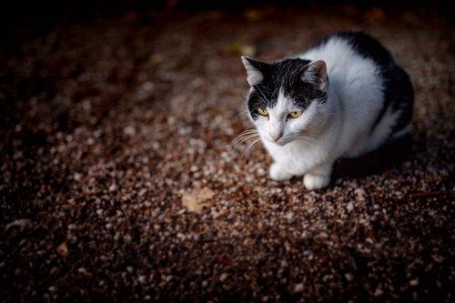Nenad_Ristic Minimalismo felino, Roberto...