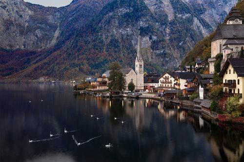Nenad_Ristic Swan Lake...
