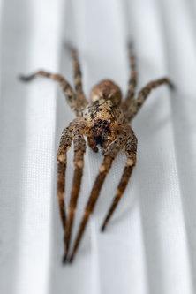 Nenad_Ristic Spider...