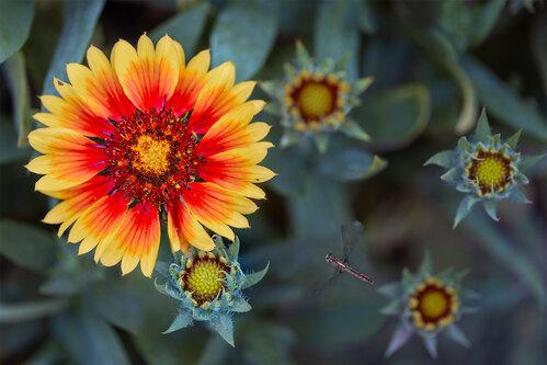 Nenad_Ristic King of the Garden...