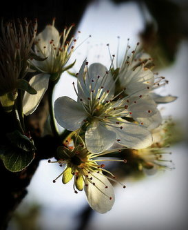 Nensi Springtime ...