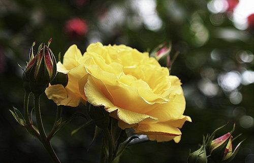 Nensi yellow <3