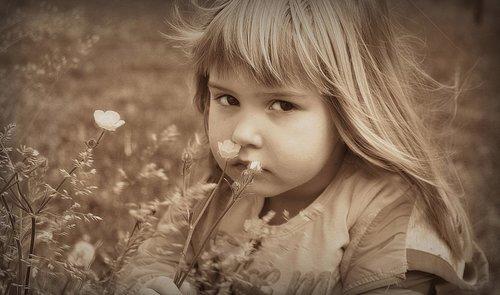 Nensi ... poljsko  cveće
