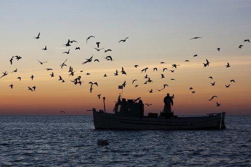NeoSky Fishermen's Life