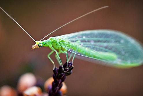 Nermin Mali zeleni